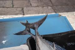 Tonight's Dinner (Let Ideas Compete) Tags: fish europe mediterranean european market croatia split fin amateur dalmatian tails fins adriatic croatian ldi fishtail dalmatia fishtails letideascompete