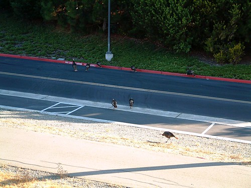 Turkeys on the Loose