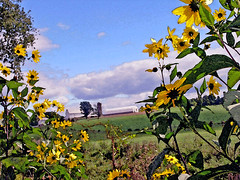 Amish Farm through Sunflowers, Watercolor Version (CountryDreaming) Tags: flowers trees ohio summer sky painterly flower tree clouds barn watercolor farm barns silo amish sunflowers farms silos summertime wildflowers latesummer amishcountry naturesfinest supershot