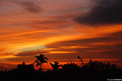 sunset (sydnzm) Tags: sunset sky nature landscape outdoor silhouettes naturallight slowshutter handheld jb johor