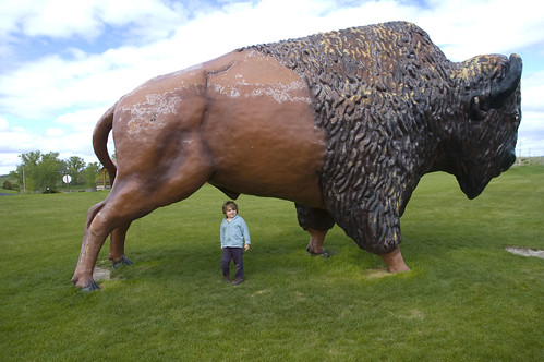 Wow that's a big buffalo