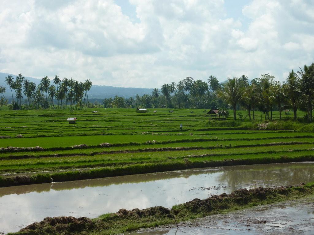 Sumatra-Bukittinggi (211)