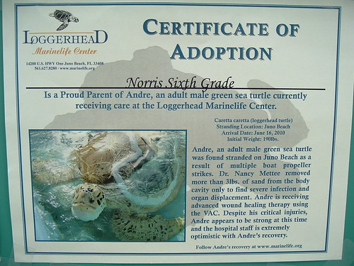 turtle adoption nov10 (2)