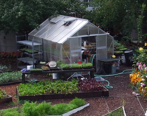 Small Greenhouse at Love Apple Farm
