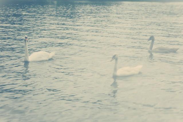 Blank#55_Zen-Sevastyanova_by_Paul-de-Luna_Meliae_14