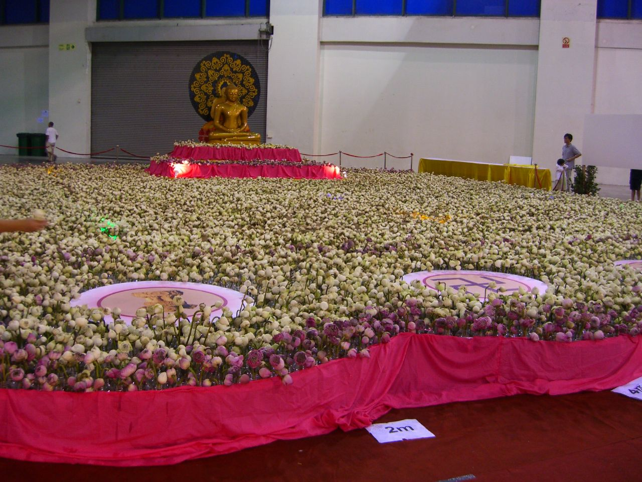 9th June - whole area completely filled with lotus flowers