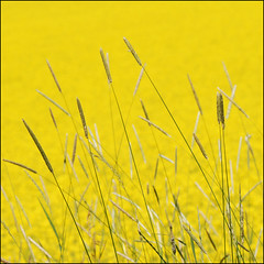 (sskkss) Tags: summer color yellow finland bravo dof july minimal have week 2007 kirkkonummi nikond200 colorphotoaward ultimateshot micronikkorvr105mm asunny