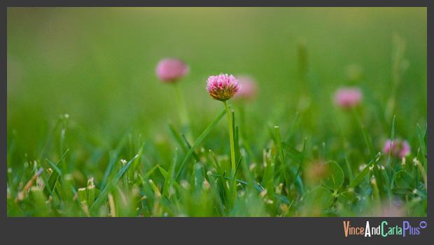 Lone Flower DOF