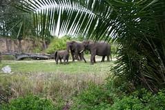 Fan (bluesbro20032003) Tags: girls fan safari elephants