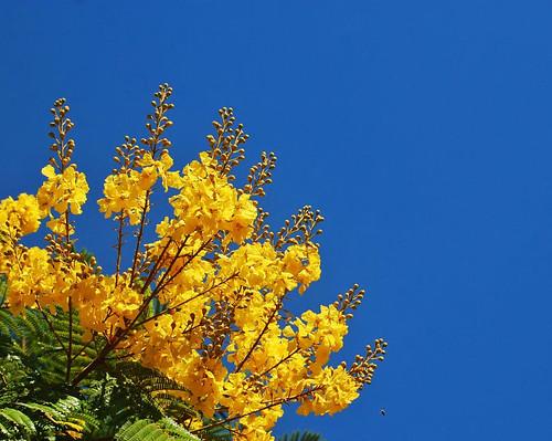 Fotos de Altisima Calidad, Colores Vivos !!!