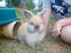 Emma (Mangora-rulz2) Tags: baby cute rabbit bunny beautiful sweet adorable fluffy precious angora floof