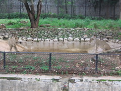 Sri Chamarajendra Zoological Gardens (dciandy) Tags: india zoo mysore mysorezoo srichamarajendrazoologicalgardens