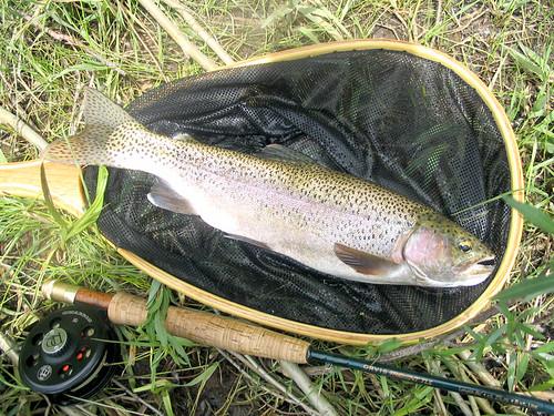 flyfishing trout rainbowtrout orvis gunnisonriver rossreels