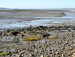 Kenn Estuary