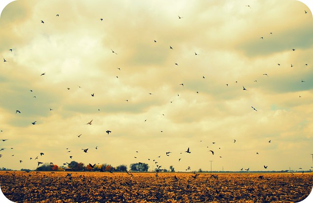 {attack of the birds}