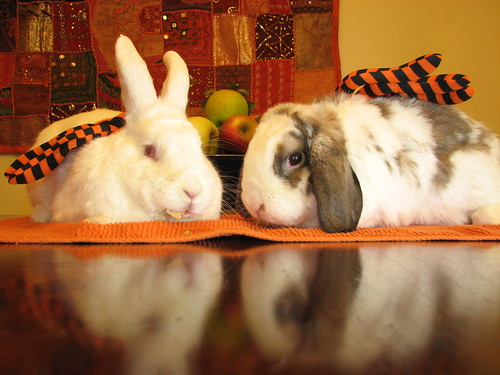 trick-or-treat bunnies