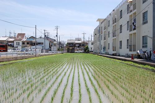 Le riz à la ville