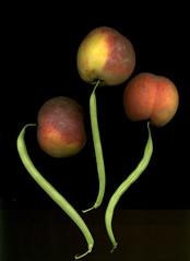 trio (ranjit) Tags: vegetables fruit yummy beans peach bean scanned peaches greenmarket greenbeans organic greenbean grandarmyplazagreenmarket highresolutionproducescans scan1464
