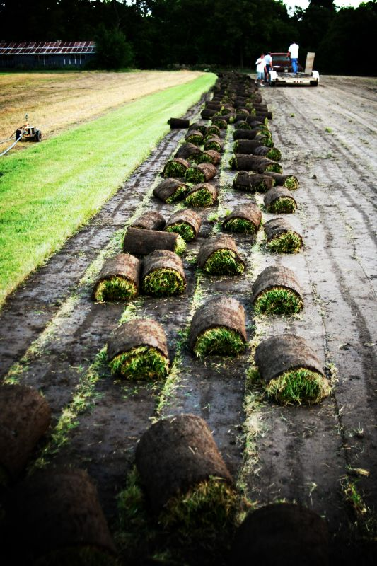 Every sod ball must be rolled cut by hand.