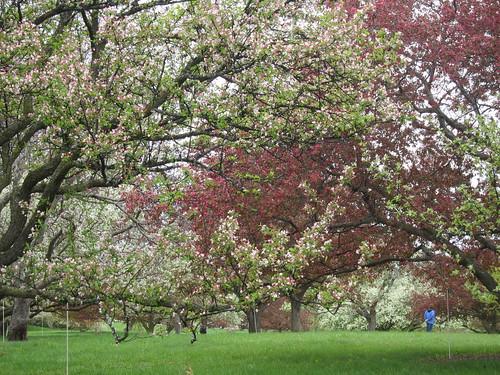 Crabapple Grove