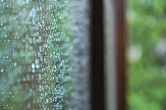 we can't prevent what we can't predict. (somogyibarbara) Tags: wood blue trees storm macro reflection tree green art window nature water glass beautiful rain metal closeup contrast outside photography photo wooden droplets drops interesting focus colorful dof close natural bright bokeh depthoffield raindrops inside lovely waterdrops bushes depth unedited tiltshift