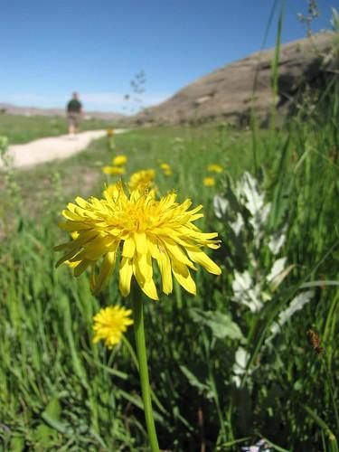 Wyoming Drive 6.25.10-32