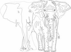 Symetrical Balance 1 (Tom Popplewell) Tags: animal wildlife hippopotamus llat dier animale  tier  elin nijlpaard djur  hippopotame flusspferd vidaselvagem zve hipoptamo ippopotamo  wildtiere hipopotam vzil zwierz hroch  vidasalvaje virtahepo     flodhst  wildedieren  faunaselvatica zvie vadvilg  villielimet espcessauvages dzikaprzyroda viltliv
