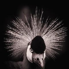 Gary (Kool2bBop) Tags: bird kigali rwanda pajaro fotografia passaro nzambi kool2bbop jmhamill palancanegra angolaphotographers fotografosdeangola avesexplorephotos photographsfromangola