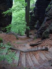 09.07.ug014 (kleefunkelchen) Tags: stairs schweiz holidays walk urlaub wandern schsische schsischeschweiz elbsandsteingebirge treppenstufen abgrund kernzone nationalparkschsischeschweiz