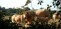 De quoi Monsanto est-il le nom? 1