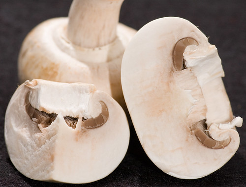 Mushroom, by photobunny