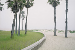 Palm Trees, El Segundo, CA (Matt Logue) Tags: california west beach palms losangeles sand solitude alone rangefinder palmtrees gsw690iii