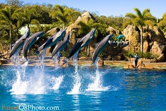 Flying Dolphins (FaisaL HamadaH) Tags: show sea water sport canon eos photo flight sydney dolphins 5d  fa 2007 faisal q8 goldcoast kwt   vwc austaralia    aplusphoto  ysplix faisalhamadah kuwaitvwc