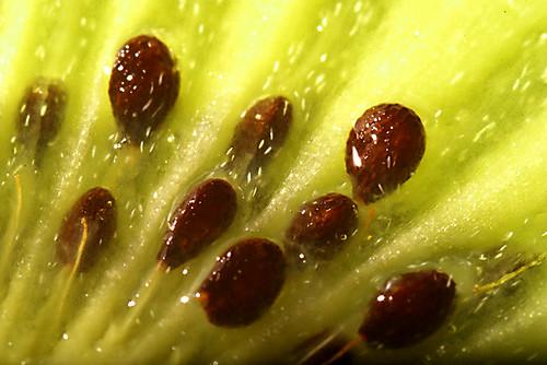 macro kiwi
