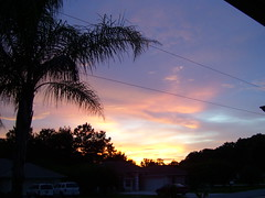 7:19pm (#610) (38 LN 38) Tags: pink blue sunset wallpaper sky black color nature yellow clouds palm powerlines palmtree personalfavorite frontyard desktopwallpaper softcolors sunsetwallpaper