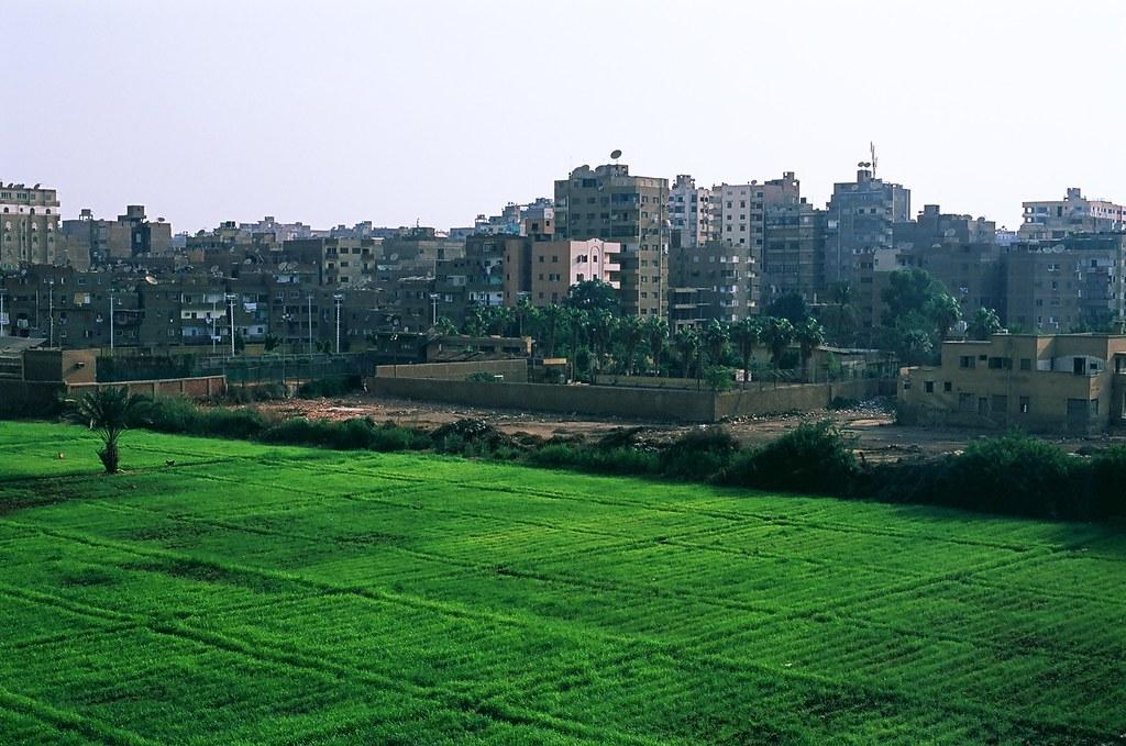 Egypt D2-001