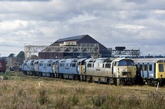 The Glory is Departed (SydPix) Tags: rust diesel swindon shell trains western works locomotive cavalier scrap railways derelict withdrawn hydraulic dragoon brel sidings wizzo thunderer dieselhydraulic class52 d1011 d1032 d1021 d1022 westernsentinel sydyoung