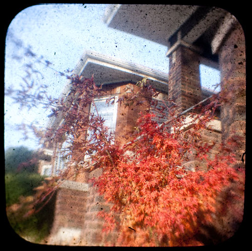 Pink and Purple Tree TtV