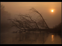 IMG_0669 (remik78) Tags: fog sunrise river mga rzeka wschd gwda wit fotocompetition fotocompetitionbronze fotocompetitionsilver fotocompetitiongold
