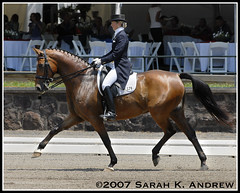 Susan Jaccoma and Wadamur (Rock and Racehorses) Tags: nj gladstone hanoverian dressage intermediaire susanjaccoma wadamur
