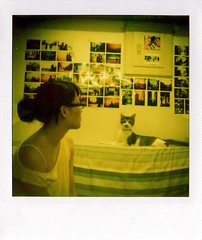 (Twiggy Tu) Tags: summer film home cat polaroid taiwan 600 photowall myeverydaylife sx70landcamera cc100 twiggyhippie