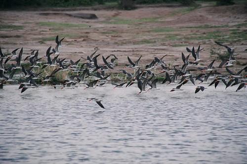 Uganda - QENP Rich Bird Life 13