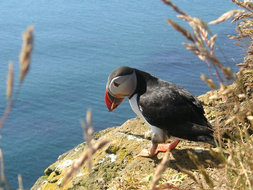 My special puffin friend