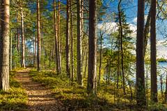 Liesjrvi National Park, Finland (PaiviSvanback) Tags: autumn forest suomi finland landscape mets syksy liesjrvi liesjrvinationalpark