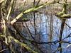 Spiegeling (oxipang) Tags: water mirror licht bomen shining zon takken spiegeling moeras reflexie koude oxipang prielenbos