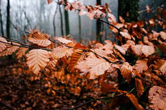 Beukenblaadjes (MJ Klaver) Tags: leaves thenetherlands arboretum wideangle 1020 sigma1020mm putten 100x sigma1020mmf35exdchsm landgoedschovenhorst image35100 100xthe2016edition 100x2016