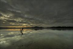 Relax... (Jose Cantorna) Tags: luz agua nikon pantano cielo nubes reflejo árbol alava euskadi horizonte araba serenidad d610
