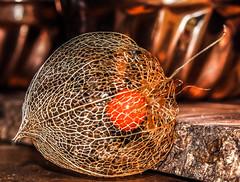 Physilas - Goudbes - Lampion (martijnvansabben) Tags: plants color colour macro nature closeup fruit garden golden lampion goud kleur vrucht goldenberry lampionplant fruist physilas