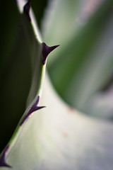 (Cathy G) Tags: curves curved cactus point prick sharp plant tropical oxford canon canon7d canon40mm oxfordbotanicalgardens close abstract