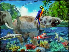 Splish splash in paradise (Swissrock) Tags: fish color bird art photoshop paradise digitalart parrot elefant deviantart photoart challenge digitalpaint splishsplash elphant photomatix pixlr